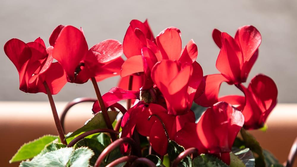 Flors al terrat